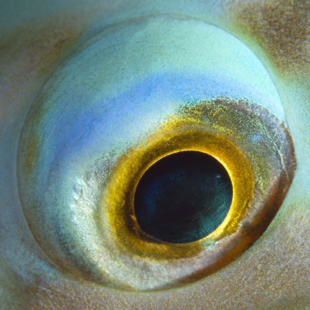 fish eyes dos en bertie winkel