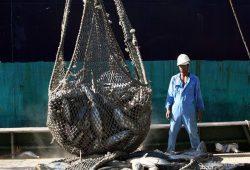 overbevissing